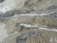 Curio Bay petrified forest close-up