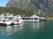 Cruise boats at Milford Sound